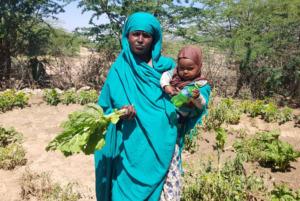 Dürre in Ostafrika - Gemüseanbau für Familien